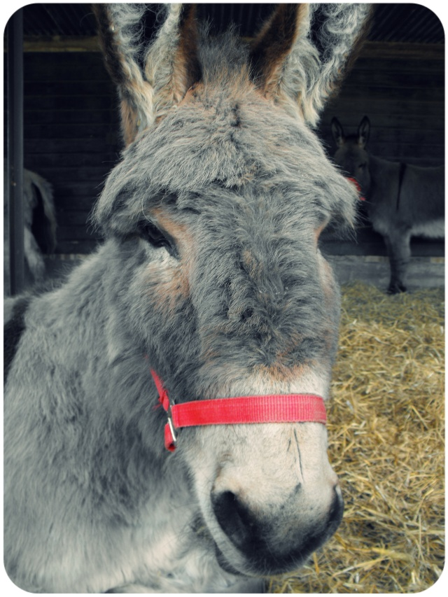 donkey hillside animal sanctuary